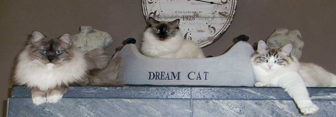 Dream Cat's Empire Header